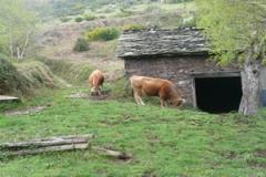 Cabañas
