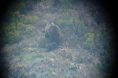 Mirador del oso